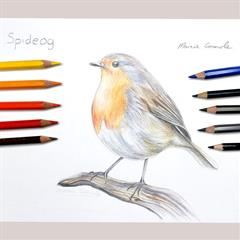 Drawing Birds of Clare Video Tutorial